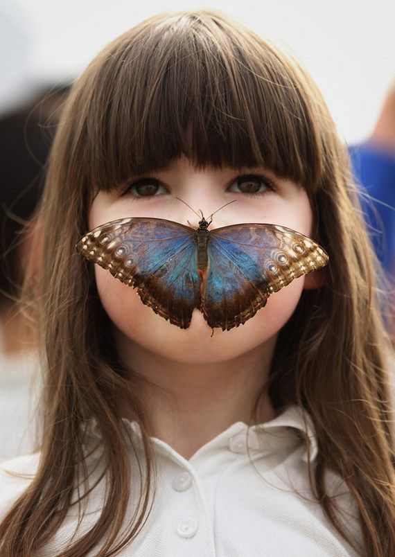 Hundreds Of Tropical Butterflies Displayed At The New Natural History Museum Exhibition